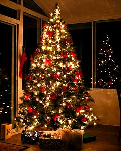 christmas trees uk grown cut fresh to order - Order Of Decorating A Christmas Tree